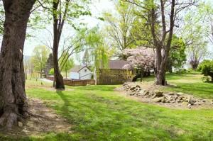 Small-grove-near-the-Spring-House-4578