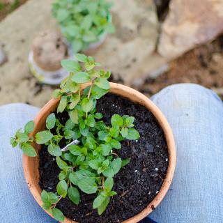 April Garden Planting & Harvesting Schedule