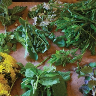 """Wild"" About Spring Foods"