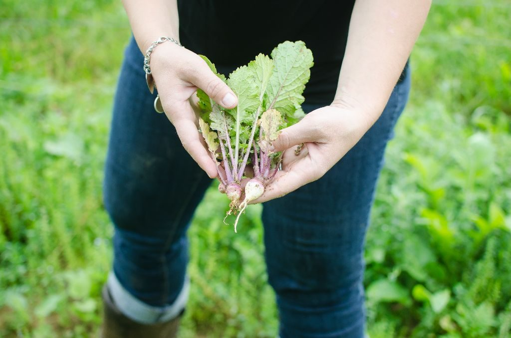 Turnips that are planted in the pig fields for wild foraging