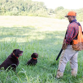 For the love of the hunt: when hunting dogs become family