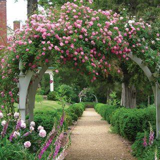 Piedmont Gardens