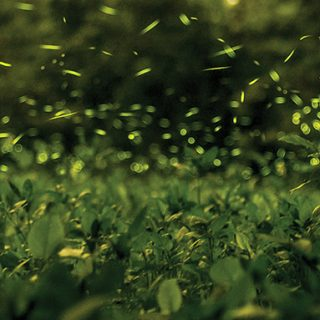 The State Arboretum – Much More than Trees: Flickering Fireflies, Burrowing Bees, Savoring Silence.