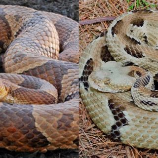 Snakes in the Piedmont: What You Need to Know