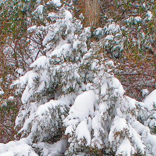 The Landscape in Winter