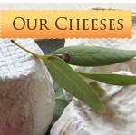 Regional Winners–National Cheese Contest