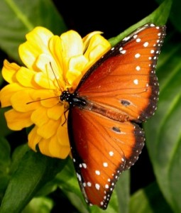 Hospice of the Rapidan's 7th Annual Butterfly Celebration