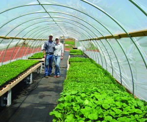 Living the Small Farm Dream….