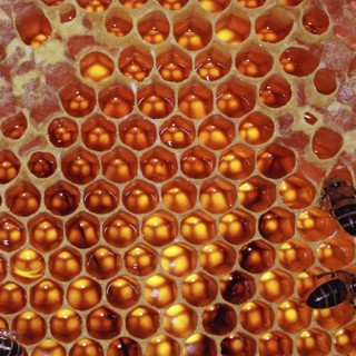 Beekeeping: Still Waiting for That Sweet Taste of Success