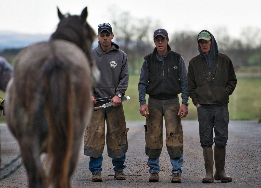 March 17, 2016: Farrier Scott Brouse (center) takes a look at how level a yearling is at Audley Farm's yearling barn near Berryville Virginia before he trims his feet. (Photo By Douglas Graham/WLP)