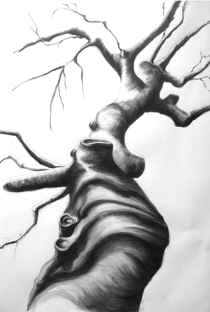 "David_Knopp_BareBeech1.jpg David Knopp Drawing (Bare Beech 1) Graphite 26""x40"""