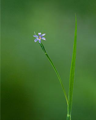 labovitz_grass