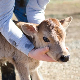 The Modern Day FarmHer, Part Three: Carol Beahm | Fields of Grace Farm