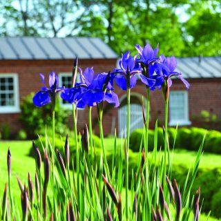 TPV's Guide to Historic Garden Week 2017: Leesburg