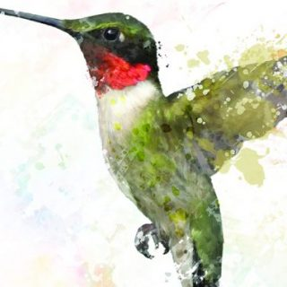 Tiny but Fierce: Ruby-throated Hummingbirds