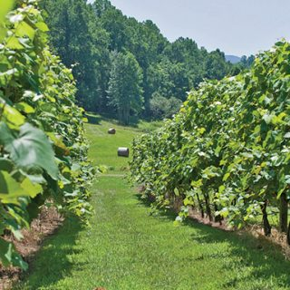 The Virginia Wine Experience
